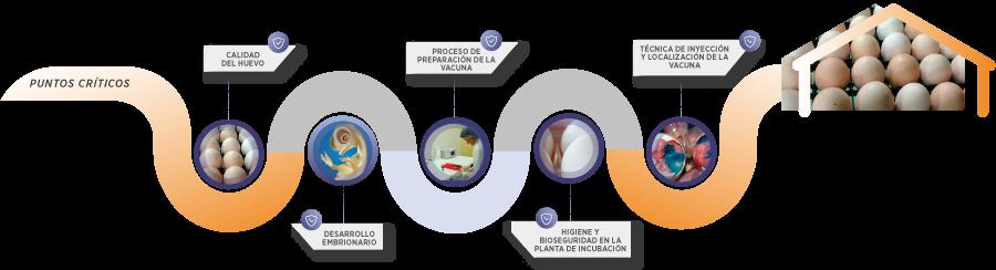 Puntos críticos para la vacunación efectiva del huevo