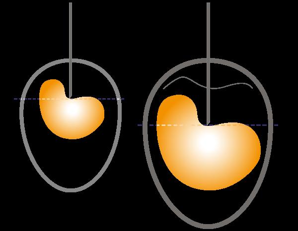 Correcta vacunación in ovo