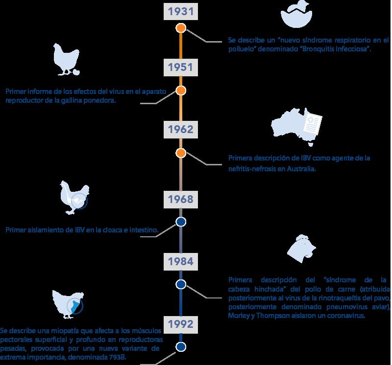 Historia de la bronquitis infecciosa aviar