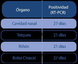 Afección del IBV en aparato respiratorio y otros órganos