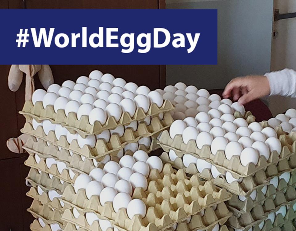 WorldEggDay 11 de octubre día mundial del huevo