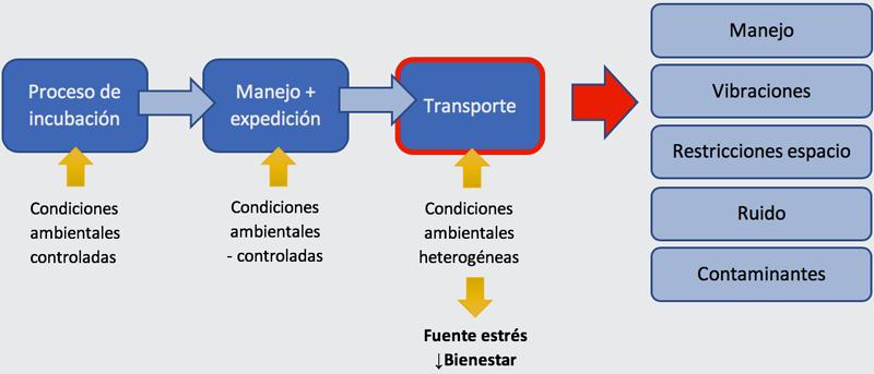transporte_pollitos_engorde_I_1