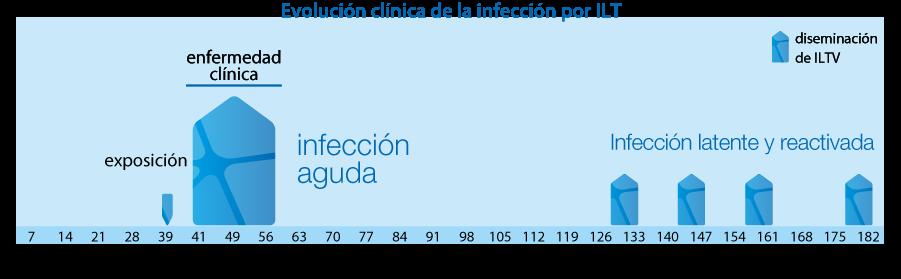 Evolución clínica de la infección