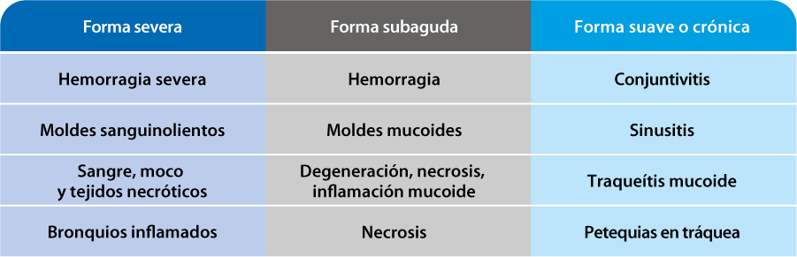 Laringotraqueítis infecciosa. Diagnóstico